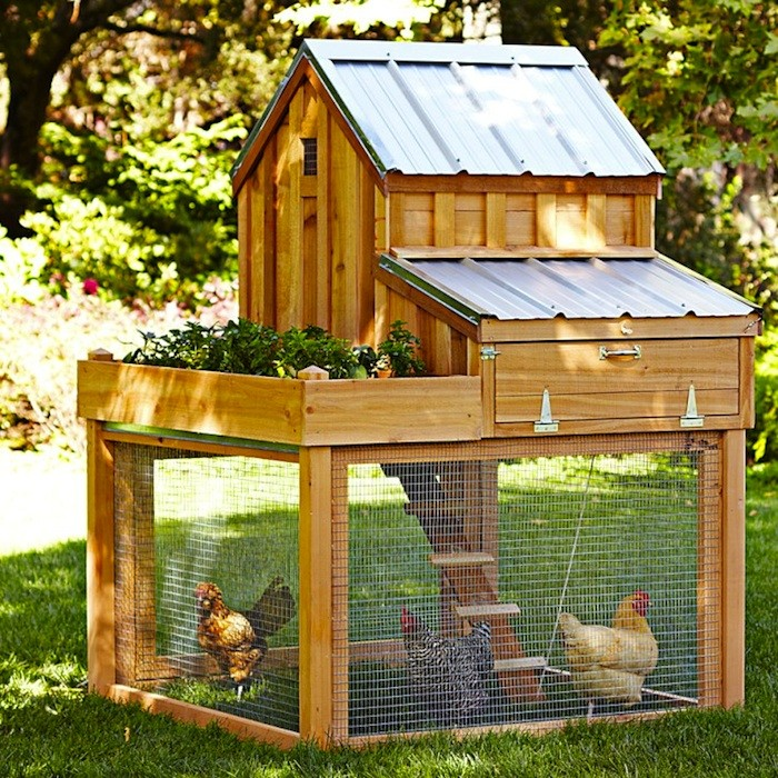 Ecoplan Permaculture chicken tractor