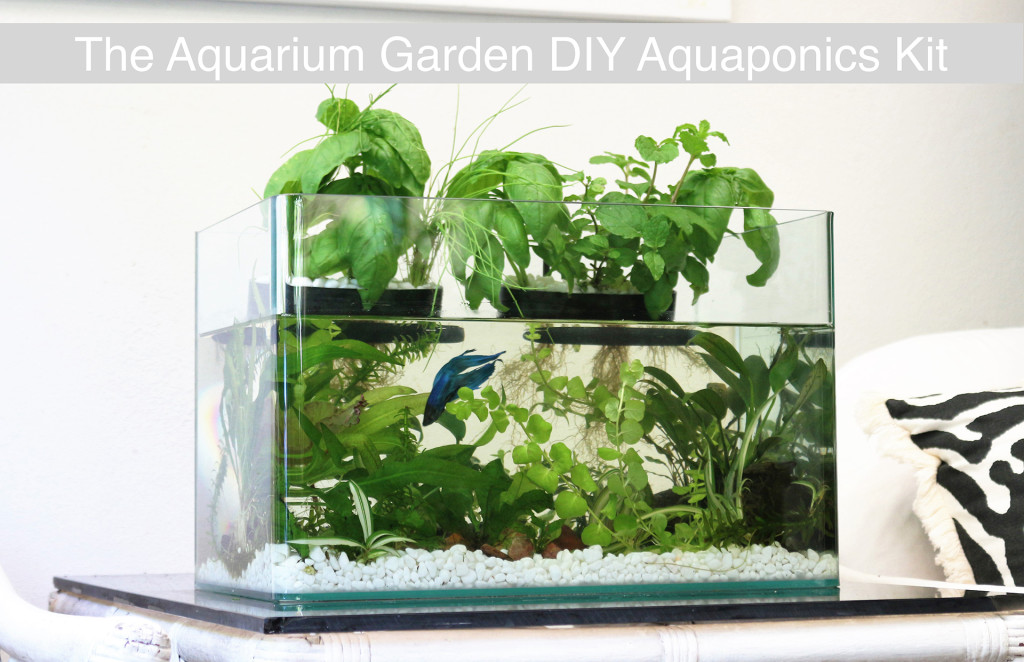 Indiegogo aquaponics crowdfunding campaign aquarium for Fish tank garden